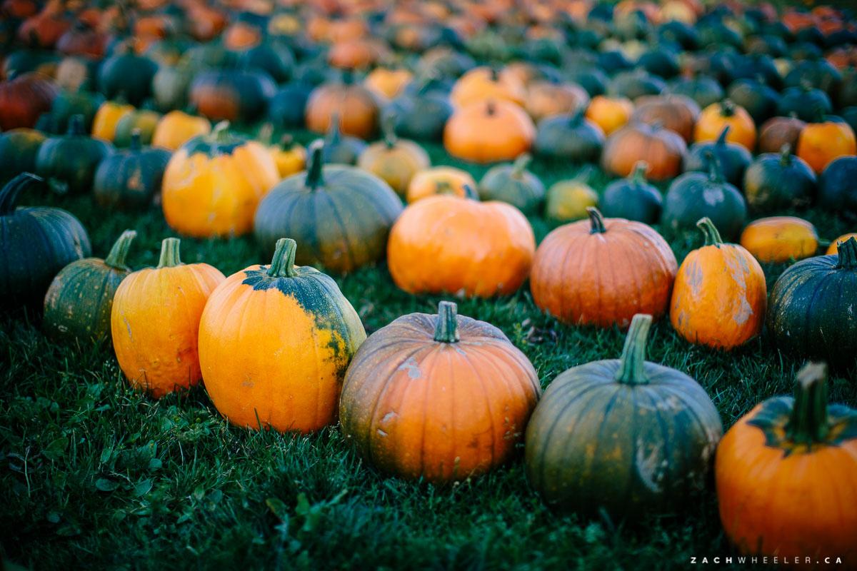Lesters-Farm-Chalet-Wedding-Reception-Blog-3