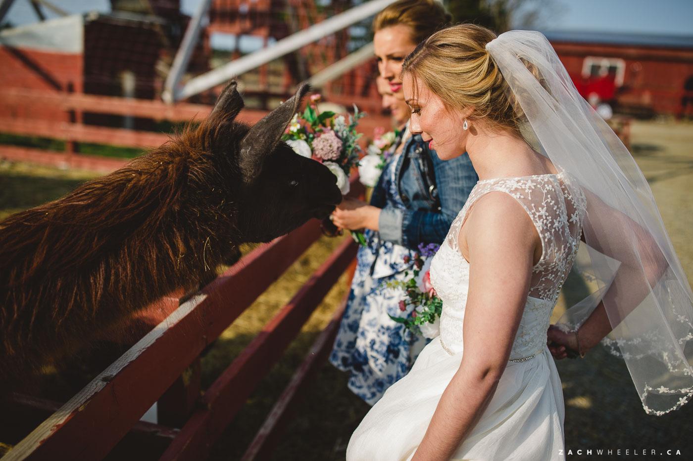 Sarah-Grant-Lesters-Fram-Wedding-67